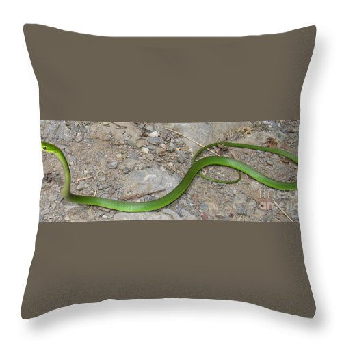 Rare Snakes Of North America Smooth Green Snake Rough Green Snake Appalachian Green Snake Forest Fauna Wild Animals Woodland Creatures Of The Forest Natural Camouflage Illusive Animals Nonvenomous Snakes Of Appalachia Rare Reptiles Of North America Harmless Snakes Throw Pillow featuring the photograph Green Snake by Joshua Bales