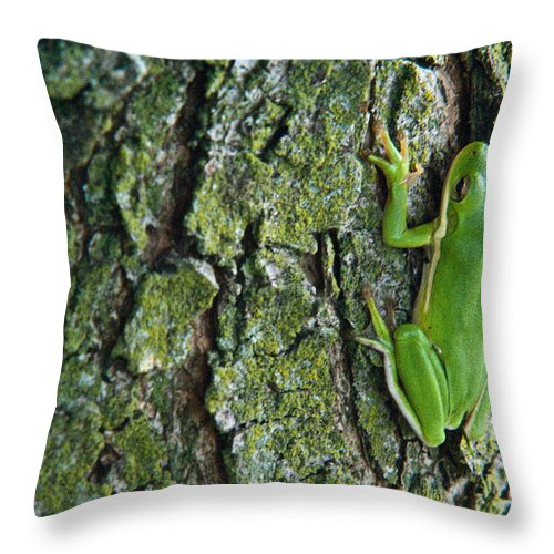 Cumberand Throw Pillow featuring the photograph Green Tree Frog On Lichen Covered Bark by Douglas Barnett