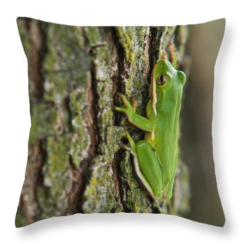 Green Throw Pillow featuring the photograph Green Tree Frog Thinking by Douglas Barnett