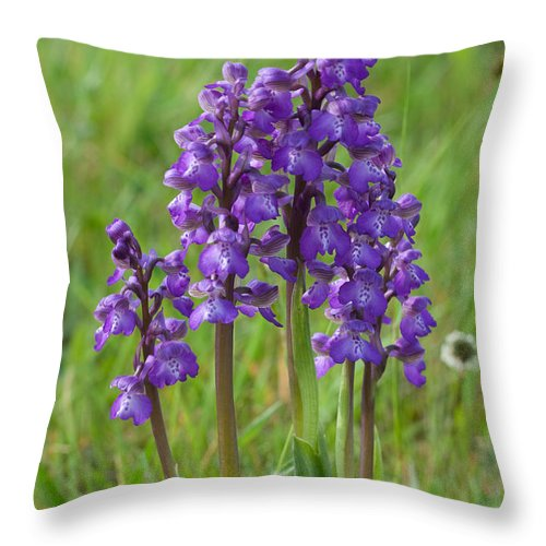 Orchid.flower Throw Pillow featuring the photograph Green-winged Orchids by Bob Kemp