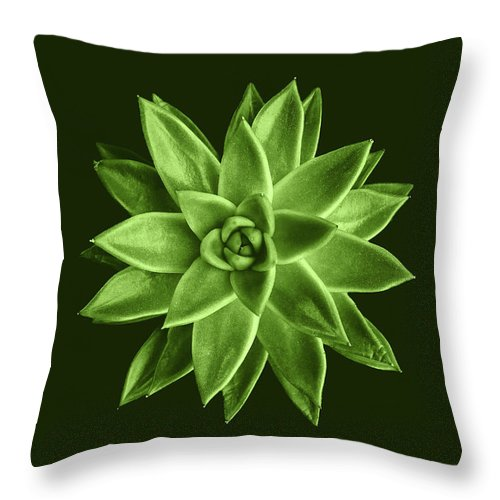 Echeveria Agavoides Throw Pillow featuring the pyrography Greenery Succulent Echeveria Agavoides Flower by PLdesign