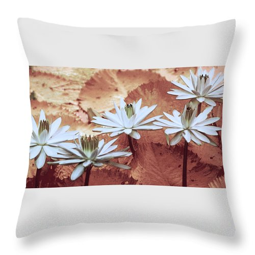 Flowers Throw Pillow featuring the photograph Greeting The Day by Holly Kempe