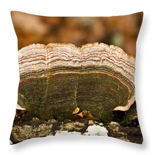 Grey Throw Pillow featuring the photograph Grey Bracket Fungi by Douglas Barnett