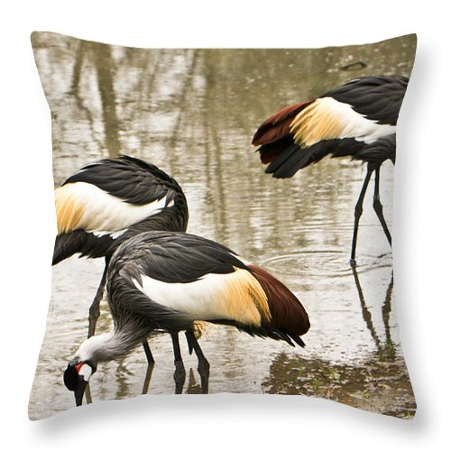 Grey Throw Pillow featuring the photograph Grey Crowned Crain Of Africa 5 by Douglas Barnett