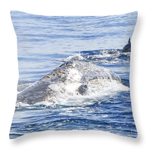 Grey Whale Throw Pillow featuring the photograph Grey Whale 2 by Shoal Hollingsworth