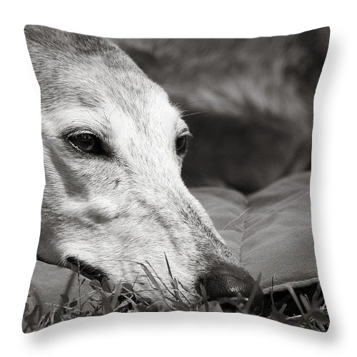 Editorial Throw Pillow featuring the photograph Greyful by Angela Rath