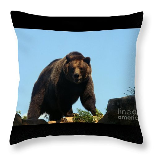 Animal Throw Pillow featuring the photograph Grizzly-7746 by Gary Gingrich Galleries