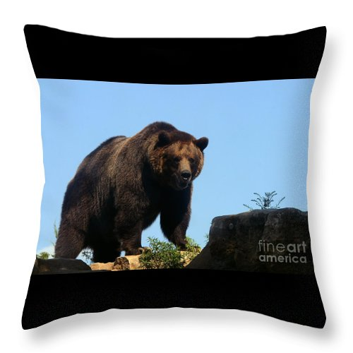 Animal Throw Pillow featuring the photograph Grizzly-7747 by Gary Gingrich Galleries