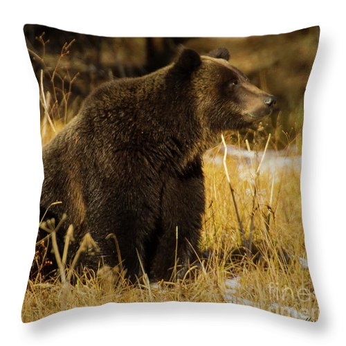 Bear Throw Pillow featuring the photograph Grizzly Bear-signed-#6672 by J L Woody Wooden