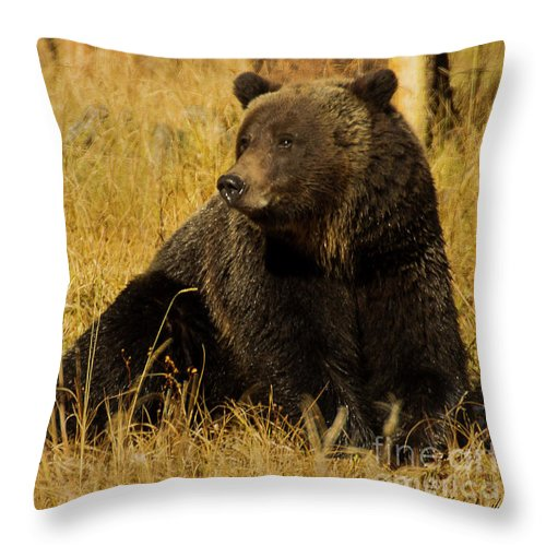Bear Throw Pillow featuring the photograph Grizzly Bear-signed-#6721 by J L Woody Wooden