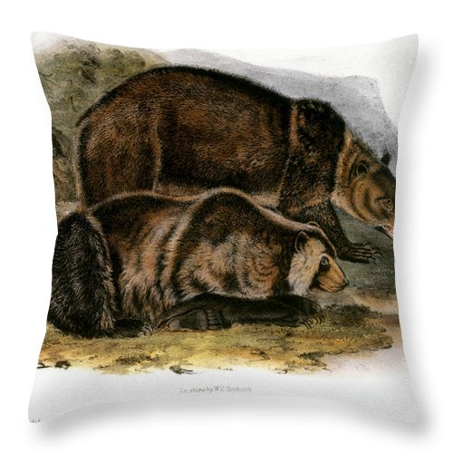 1846 Throw Pillow featuring the photograph Grizzly Bear (ursus Ferox) by Granger