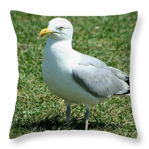 Gift Throw Pillow featuring the photograph Grounded by Barbara S Nickerson