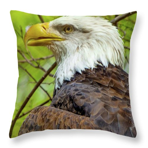Orcinusfotograffy Throw Pillow featuring the photograph Grounded by Kimo Fernandez