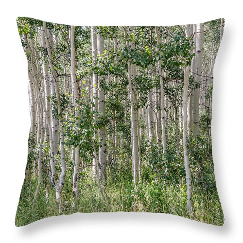 Quakies Throw Pillow featuring the photograph Grove Of Quaking Aspen Aka Quakies by Sue Smith