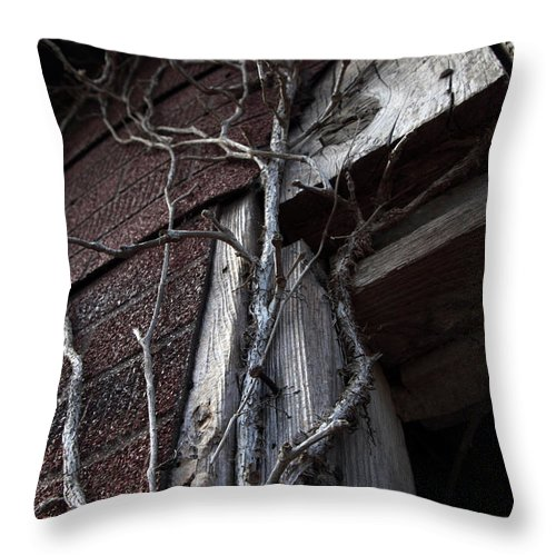 Broken Throw Pillow featuring the photograph Growth by Amanda Barcon