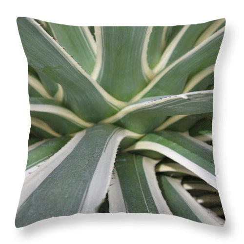 Nature Throw Pillow featuring the photograph Growth by Munir Alawi