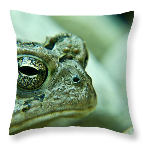 Toad Throw Pillow featuring the photograph Grumpy Toad by Douglas Barnett