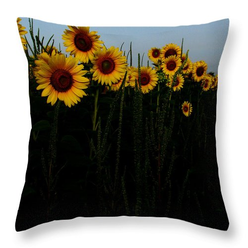 Sunflowers Throw Pillow featuring the photograph Guide Me by Amanda Barcon