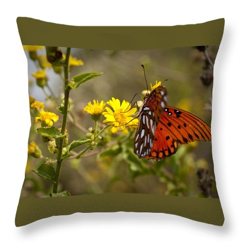 Gulf Fritillary Throw Pillow featuring the photograph Gulf Fritillary Agraulis Vanillae Red Butterfly by Dustin K Ryan