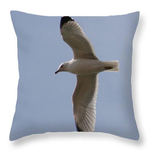 Bird Throw Pillow featuring the photograph Gull 1 by David Dunham