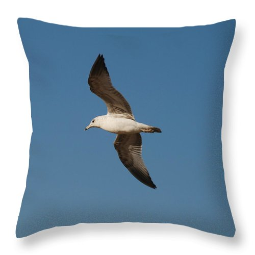 Seagull Throw Pillow featuring the photograph Gull As Seen From The Beach by Richard Bryce and Family