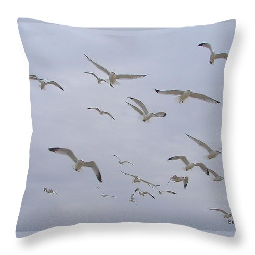 Birds Sky White Throw Pillow featuring the photograph Gulls by Luciana Seymour