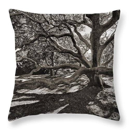 Trees Throw Pillow featuring the photograph Gumbo Limbo by HH Photography of Florida
