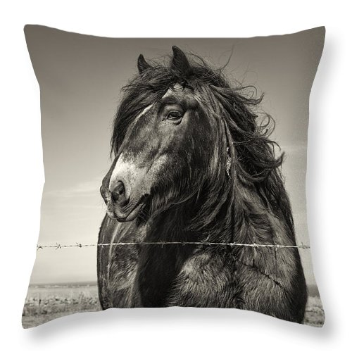 Horse Throw Pillow featuring the photograph Gypsy by Wendy Chapman