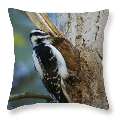 Birds Throw Pillow featuring the photograph Hairy Woodpecker by Ben Upham III