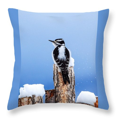 Wildlife Throw Pillow featuring the photograph Hairy Woodpecker by Rupert Chambers