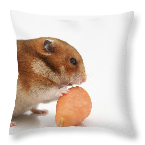 Hamster Throw Pillow featuring the photograph Hamster Eating A Carrot by Yedidya yos mizrachi