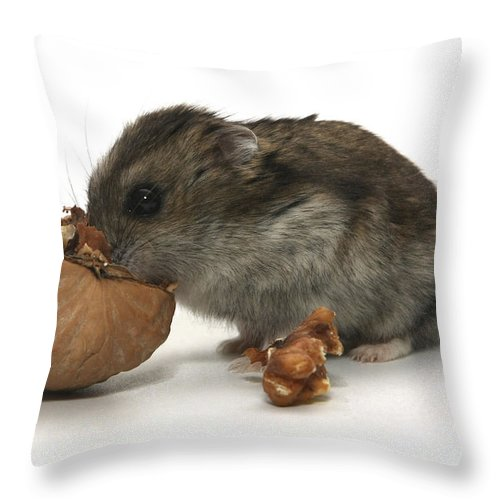 Hamster Throw Pillow featuring the photograph Hamster Eating A Walnut by Yedidya yos mizrachi