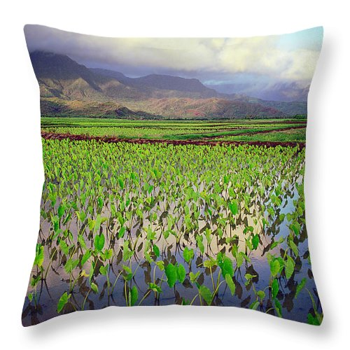Kauai Throw Pillow featuring the photograph Hanalei Valley Taro Ponds by Kevin Smith