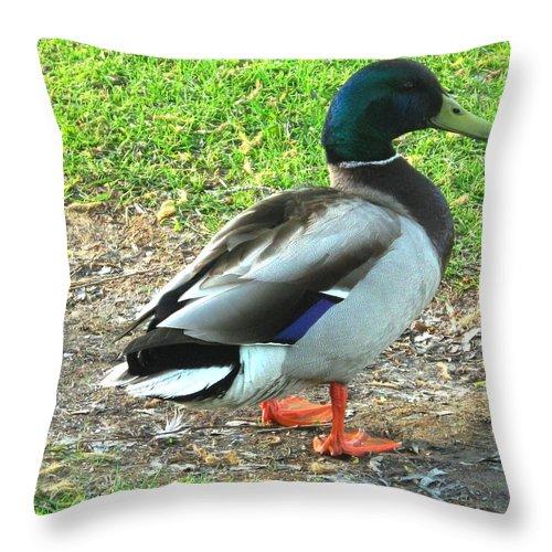 Mallard Throw Pillow featuring the photograph Handsome Fellow by Ian MacDonald