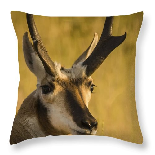 Antelope Throw Pillow featuring the photograph Handsome Is by Albert Seger