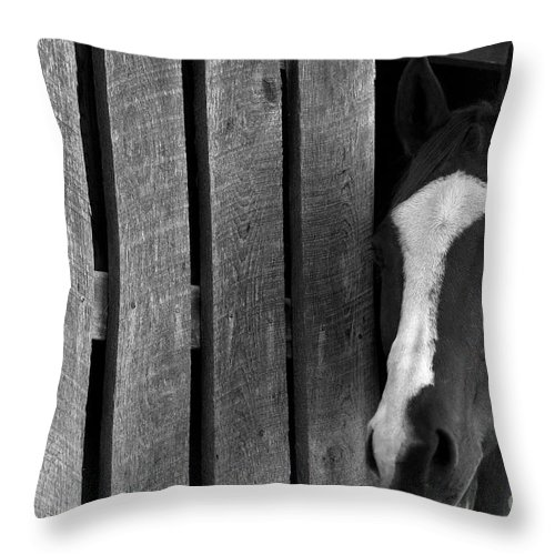 Horse Throw Pillow featuring the photograph Handsome T by Angela Rath