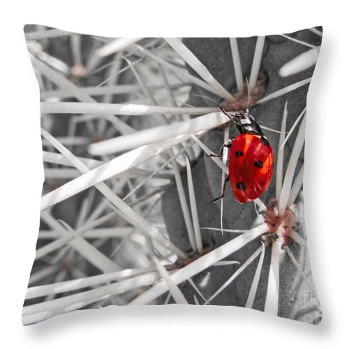 Hanging Throw Pillow featuring the photograph Hang In There by ArtissiMo Photography