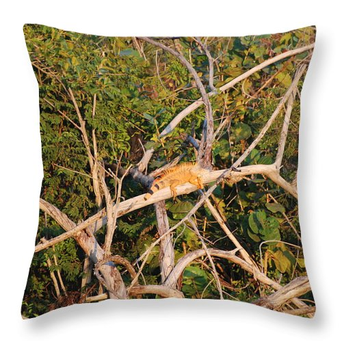 Iguana Throw Pillow featuring the photograph Hanging Iguana by Rob Hans