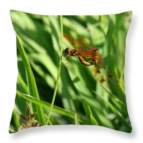 Bug Throw Pillow featuring the photograph Hanging On For The Ride by David Dunham