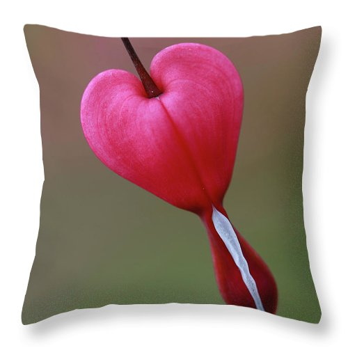 Bleeding Heart Throw Pillow featuring the photograph ...hanging On by Martina Schneeberg-Chrisien