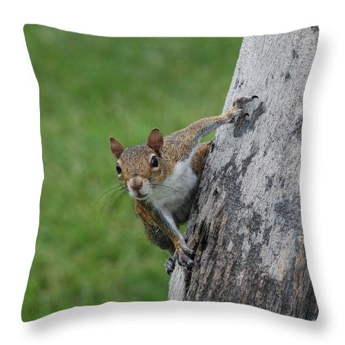 Squirrel Throw Pillow featuring the photograph Hanging On by Rob Hans
