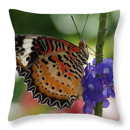 Butterfly Throw Pillow featuring the photograph Hanging On by Shelley Jones