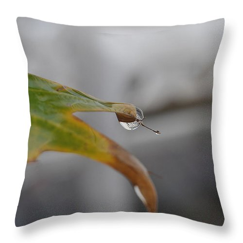 Leaf Throw Pillow featuring the photograph Hanging On by Tazz Anderson