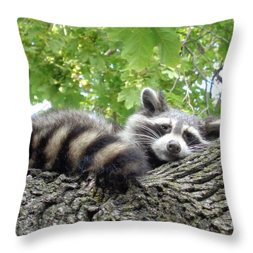 It Is Rare To See A Racoon Out In The Middle Of The Afternoon. I Was Very Pleased To Get This Great Shot Of Him Checking Me Out!  :) Throw Pillow featuring the photograph Hanging out by J Andrel