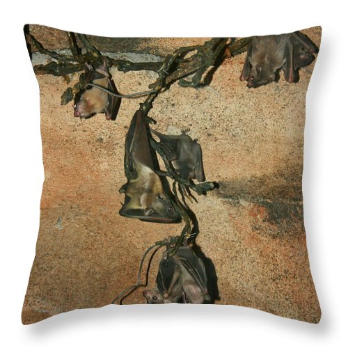 Animal Throw Pillow featuring the photograph Hanging Out With My Buds by David Dunham