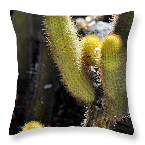 Clay Throw Pillow featuring the photograph Happy by Clayton Bruster