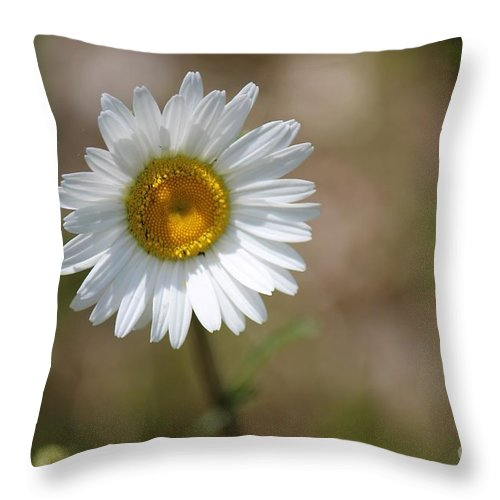 Daisy Throw Pillow featuring the photograph Happy Daisy In The Sun by Colleen Snow