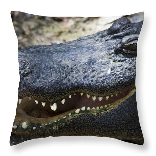 Alligator Throw Pillow featuring the photograph Happy Florida Gator by Roger Wedegis