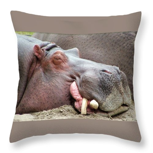 Hippopotamus Throw Pillow featuring the photograph Happy Hippo by Tiffany Vest