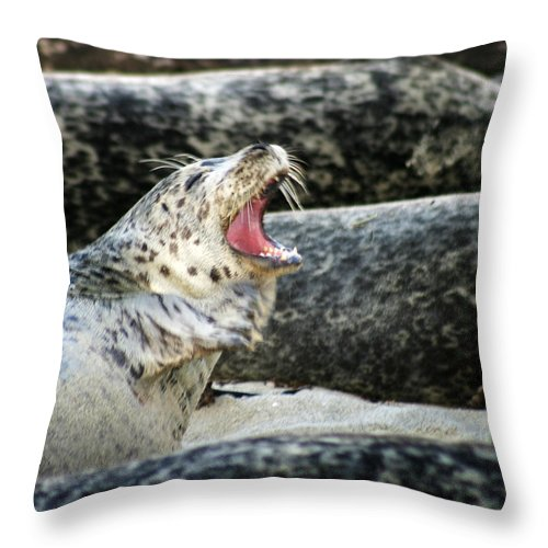 Harbor Seal Throw Pillow featuring the photograph Harbor Seal by Anthony Jones